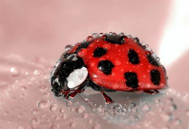 ladybug-1036453_640.jpg