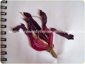 fallen-flower