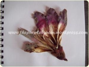 flower (1)