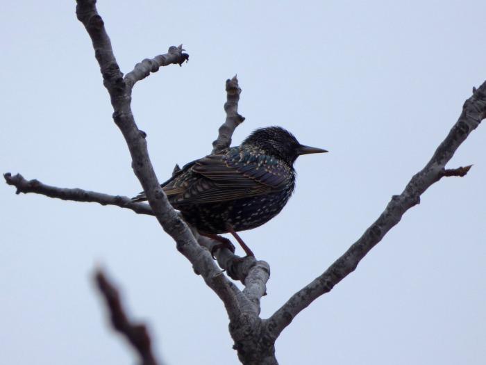 bird-2005079_1920