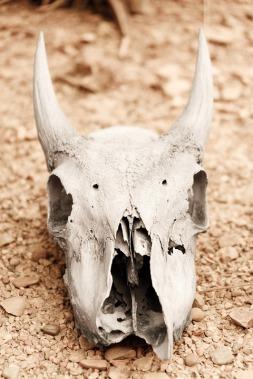 animal-skull-164258_960_720